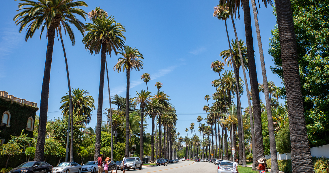 los angeles beverly hills palme
