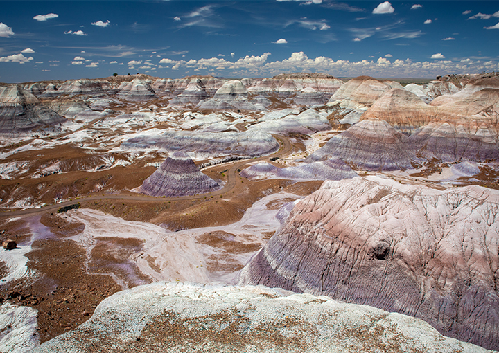 petrified forest usa